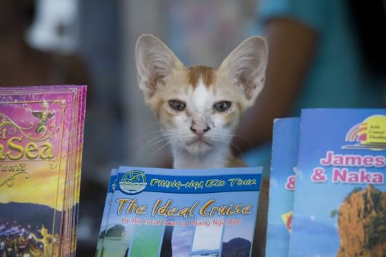 Funny Cat, Thailand Cat,